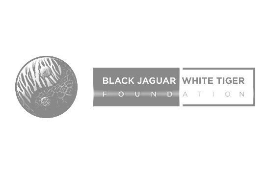 Pitch Perfect Creative Client - Black Jaguar White Tiger Foundation